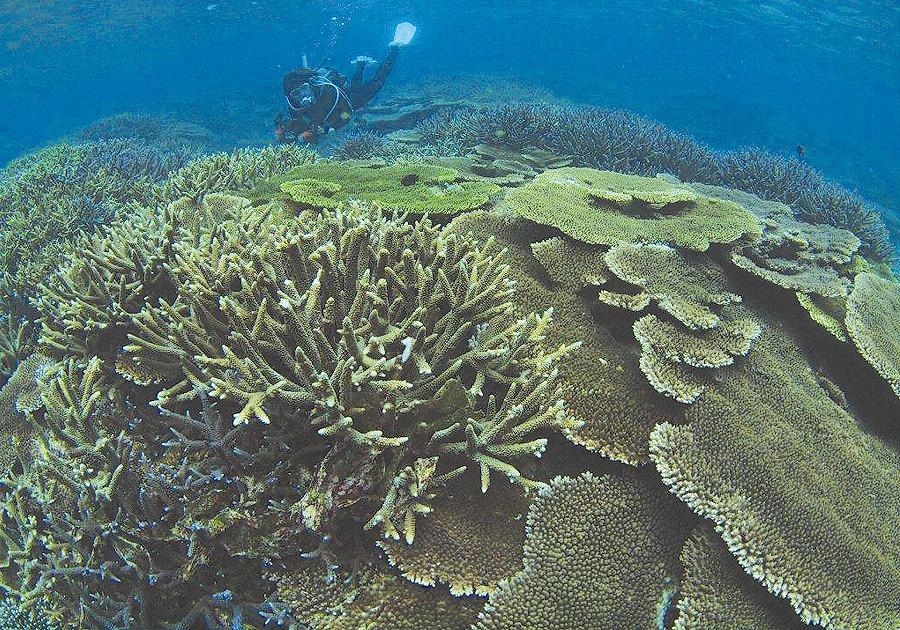 サンゴ礁セミナー開催!