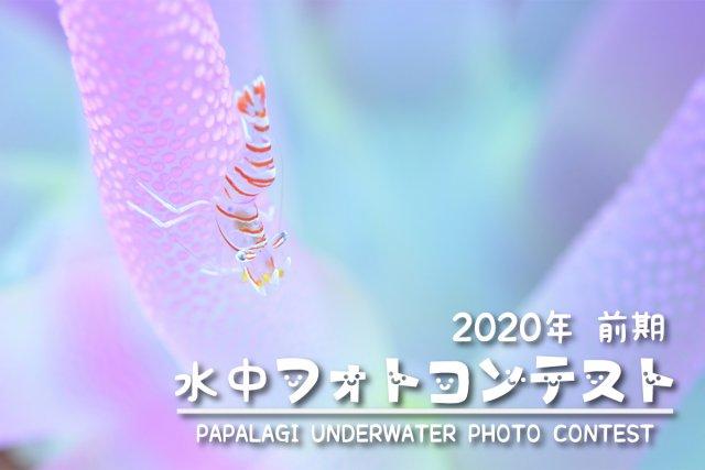 2020年パパラギ フォトコンテスト前期募集