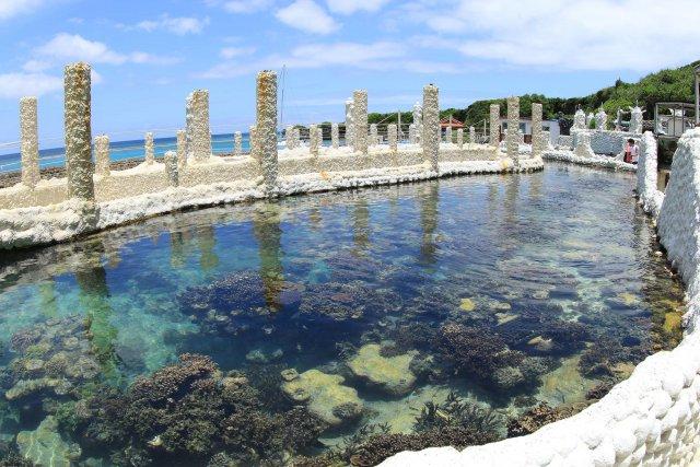 サンゴの苗木