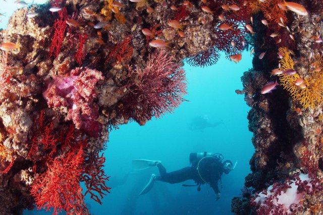 漁礁とダイバー