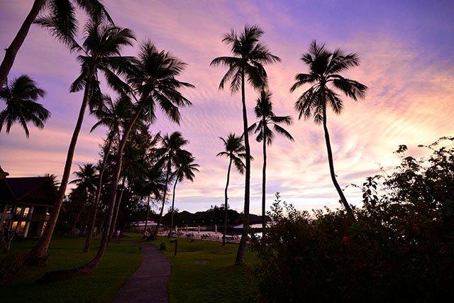 >南国の夕日とヤシの木の影