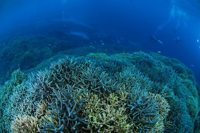 素晴らしい枝サンゴ
