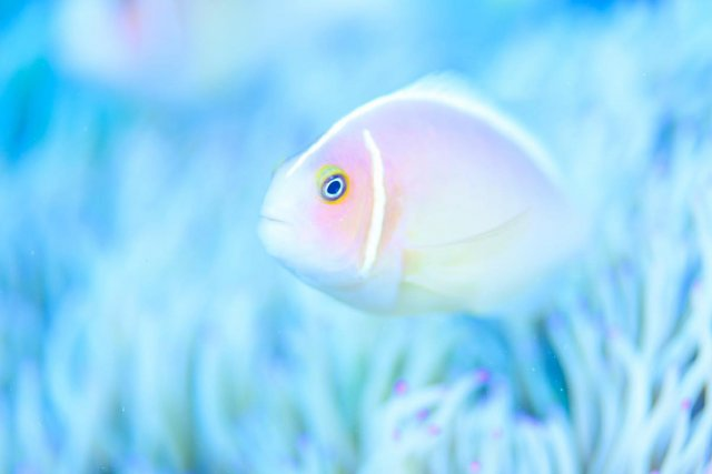 10月24日~26日 沖縄・サンゴ移植ツアー