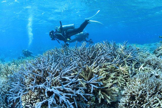 サンゴぎりぎりを安定して泳ぐことができる