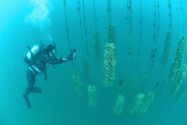 牡蠣棚のなかをダイビング