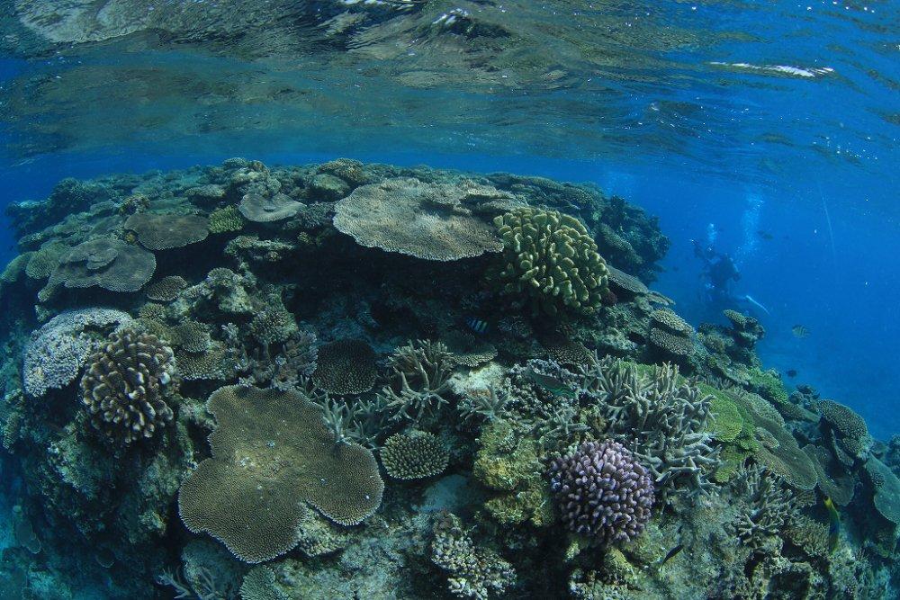 10月26日~28日 沖縄・サンゴ移植ツアー