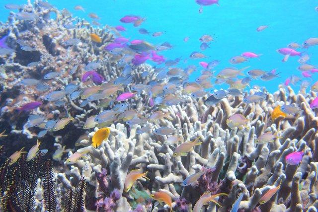 サンゴと色鮮やかな群れ