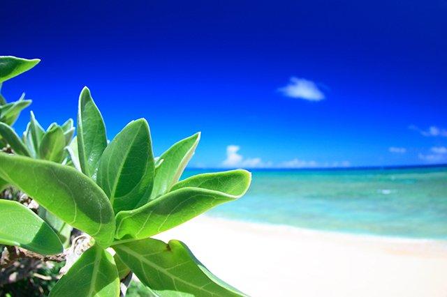 目に鮮やかなビーチ