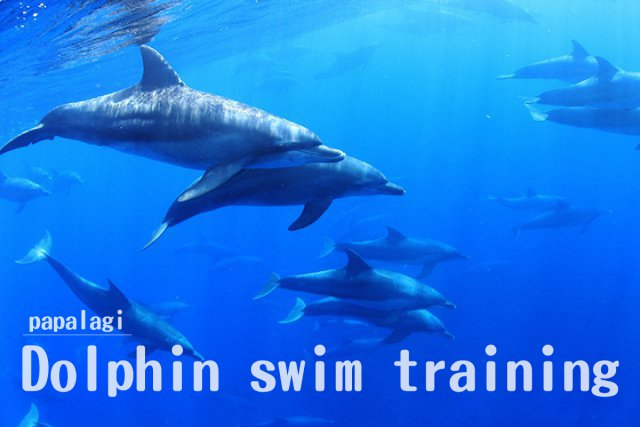 ドルフィンスイムトレーニングコース