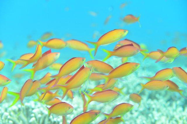 サンゴ礁の楽園 阿嘉島