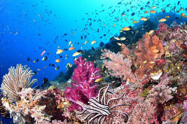 2月6日~13日 パプアニューギニア