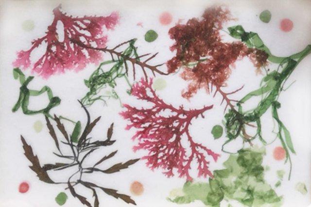 海藻アート一泊ツアー
