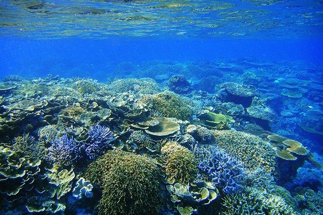 波照間島のサンゴ