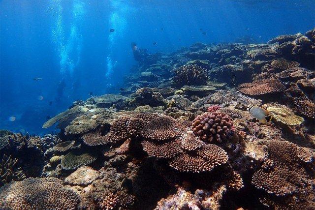 11月12日~14日 沖縄本島サンゴ移植&ケラマツアー