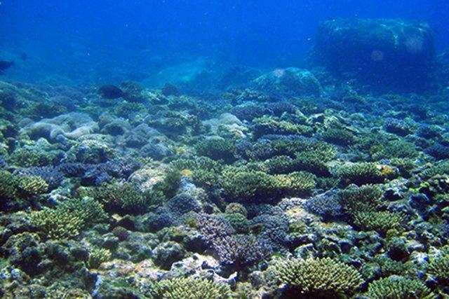 豊かなサンゴ
