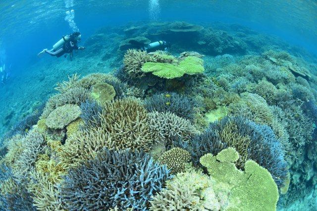 サンゴ礁セミナー