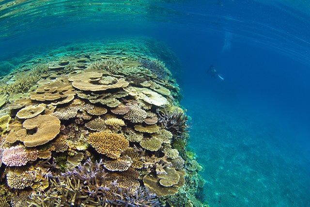 サンゴのドロップオフ