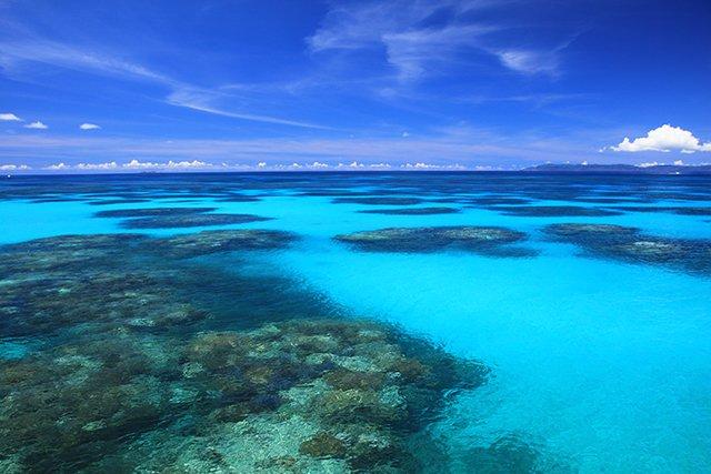 水面から見たサンゴの群生