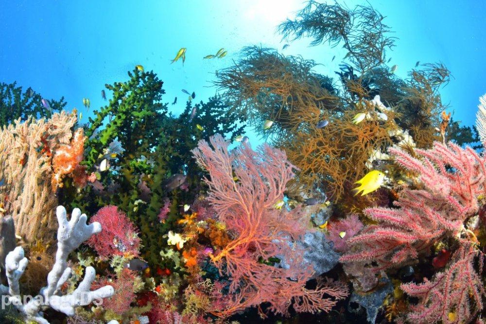 2月8日~15日 パプアニューギニア