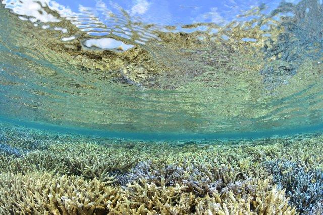サンゴ礁の楽園 西表島
