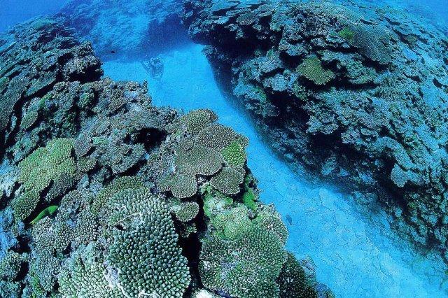 サンゴの水路