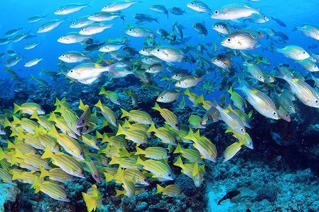 色鮮やかな魚の群れ