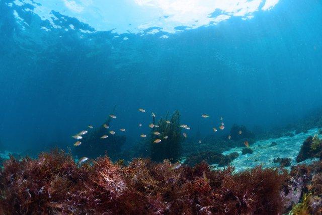エントリー口の光と魚