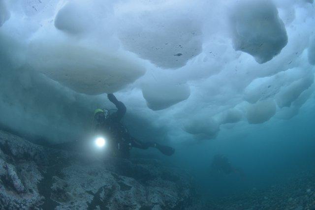 世界自然遺産 知床 流氷ダイブツアー