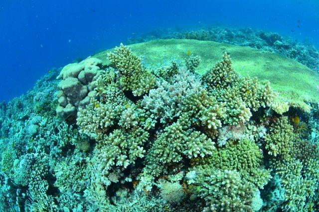 サンゴも元気です。