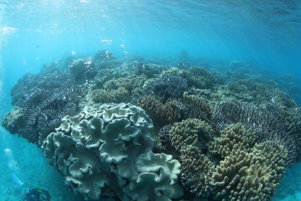 10月27日~29日 沖縄・サンゴ移植ツアー