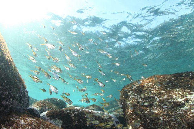 浅場も魚がたくさん