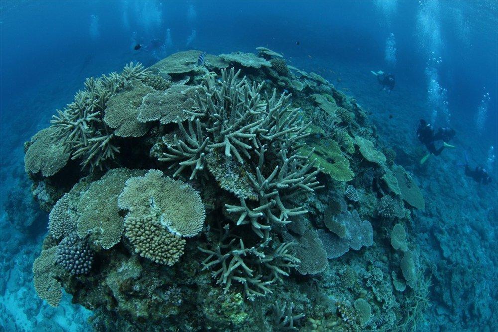 5月27日~29日 沖縄・サンゴ移植ツアー