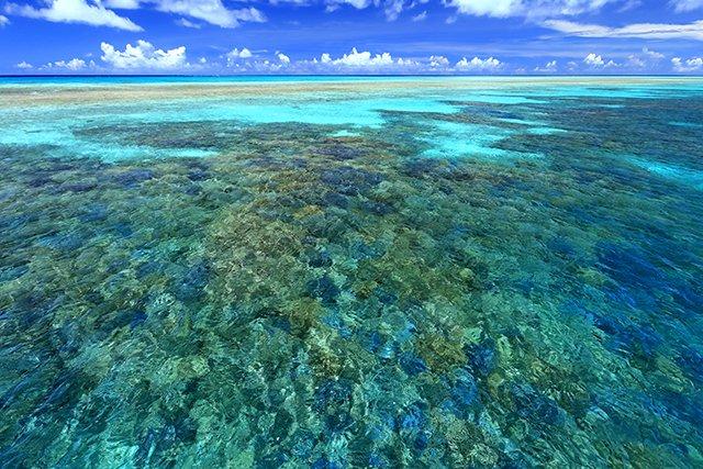 広大に広がるサンゴ