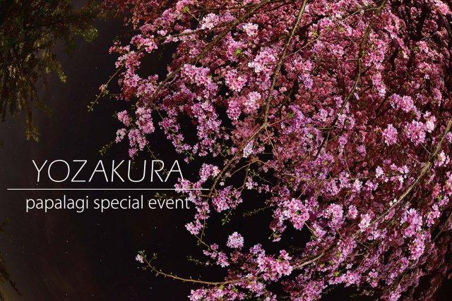 パパラギ 夜桜イベント