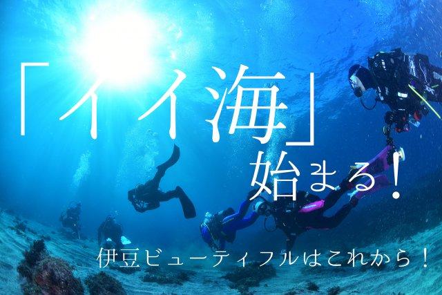 「イイ海」始まる!