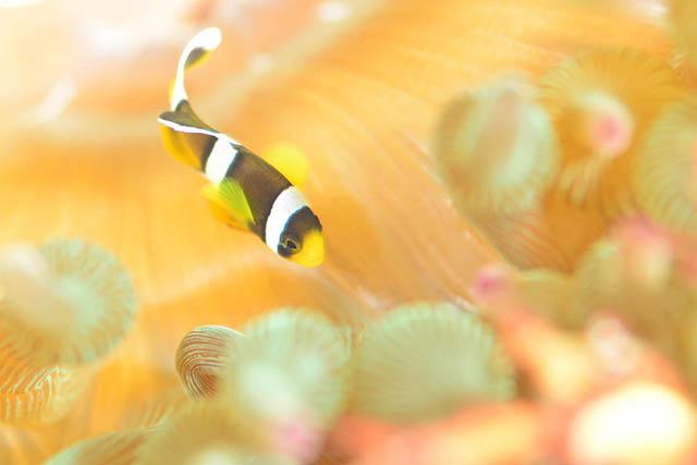 あふれる水中生物の世界!