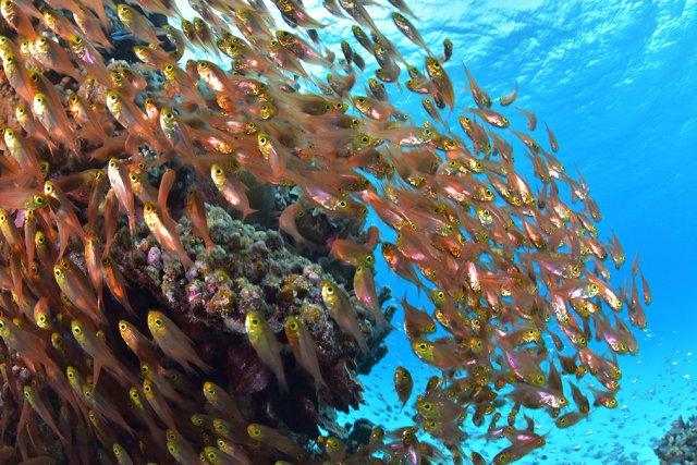 慶良間の豊富な魚影