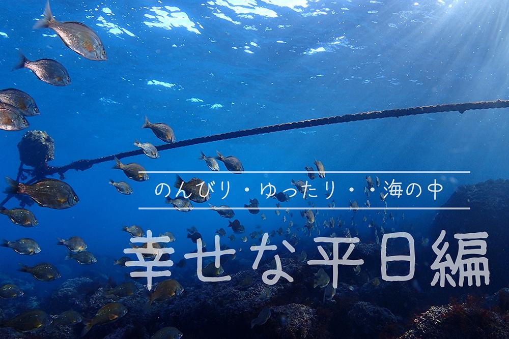 のんびり海の中 幸せな平日編