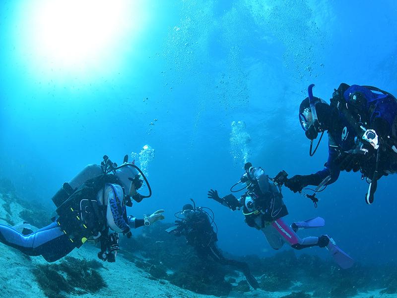 水中ダイバー