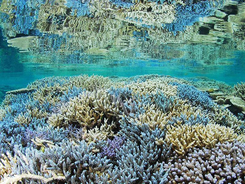 PADIサンゴ礁セミナー