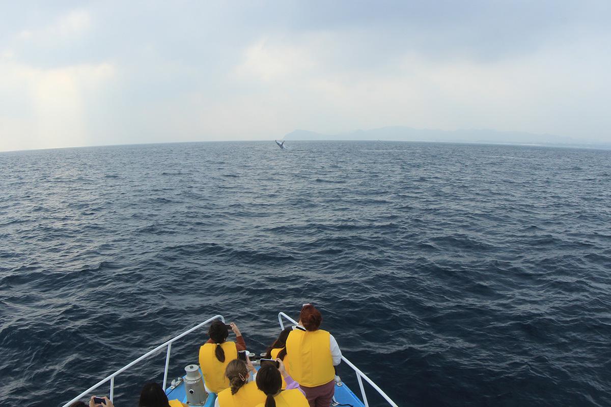 ボートからホエールウォッチング