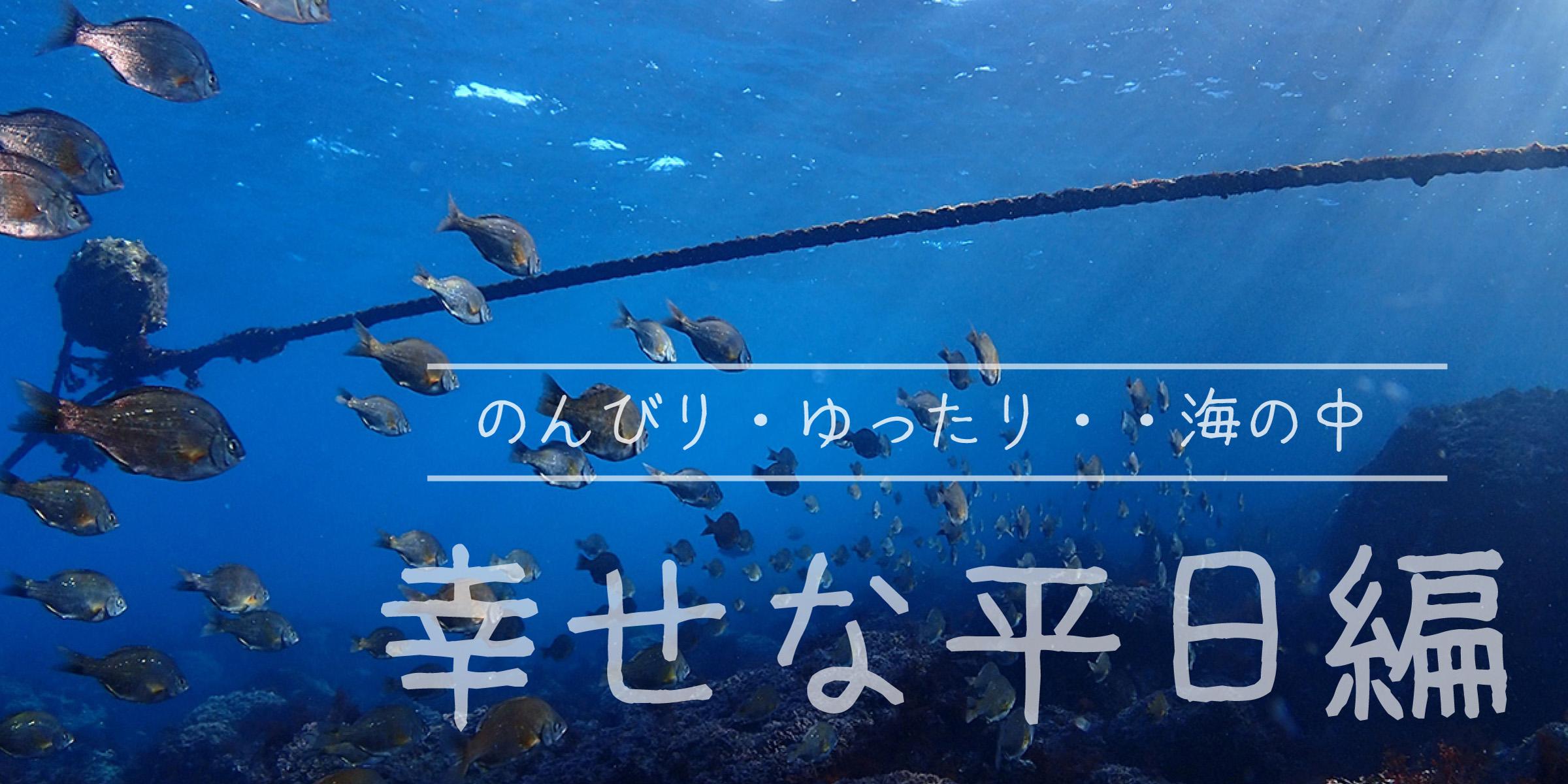 のんびり・ゆったり 海の中 幸せな平日編
