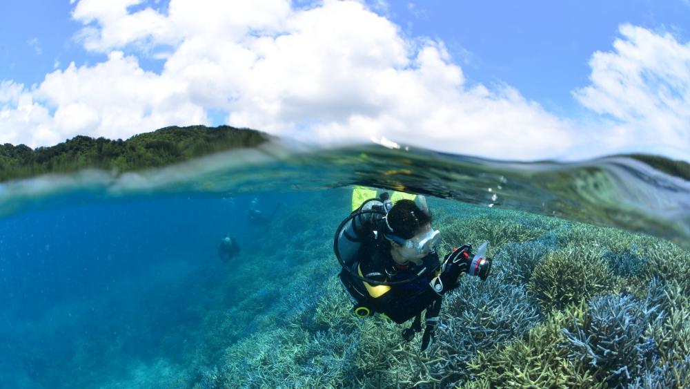 サンゴ礁の海を泳ぐダイバー