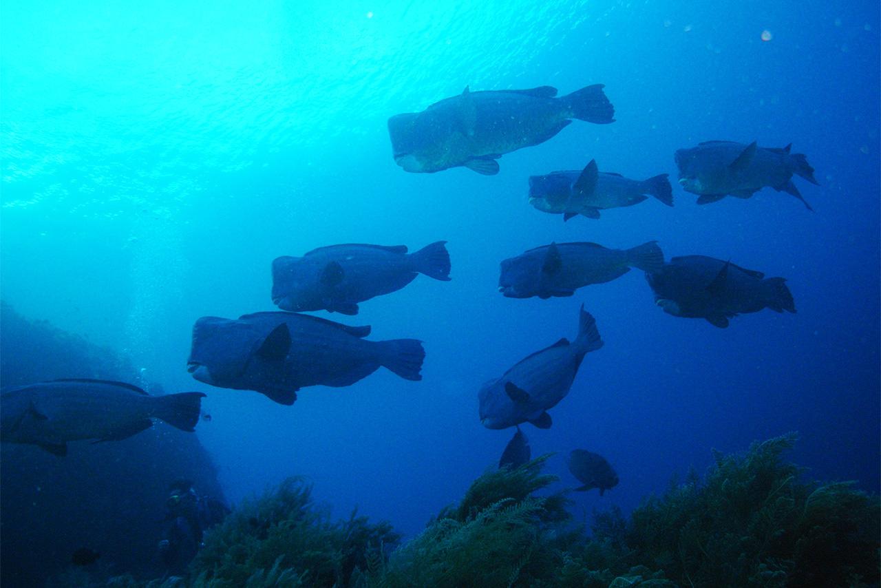 2月8日~2月12日 バリ島ツアー